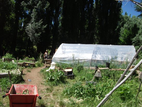 local, organic, sustainable. the garden from my patagonian permaculture course